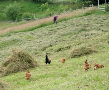 The system of farming in Magura has worked perfectly for a thousand years or more; organic, simple and sustainable
