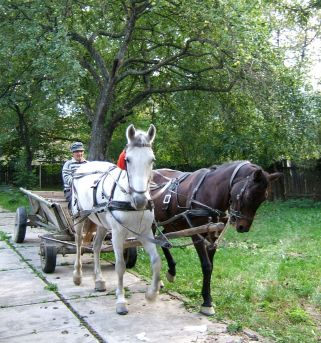 Horse and caruta is still a common sight in rural Transylvania