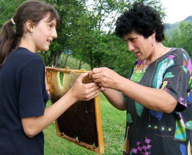 https://maguratransylvania.wordpress.com Piatra Craiului National Park, wildflower honey