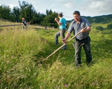 Scything the wildflower meadow at midsummer in Transylvania