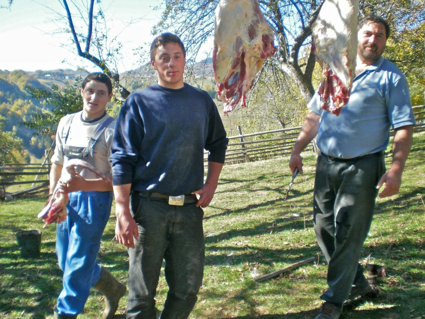 Family skills produce organic free-range beef at home, in the wildflower meadows of Magura Transylvania