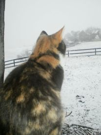 Cat loves the snow