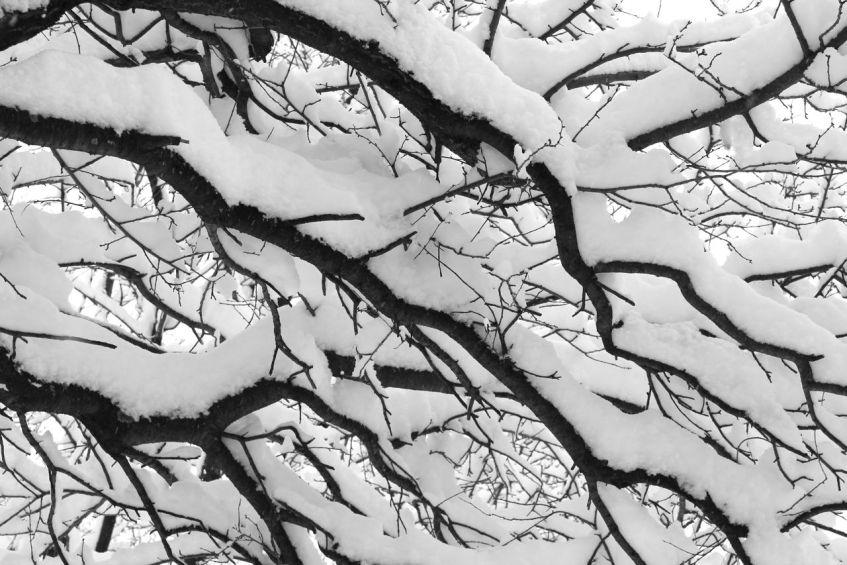 Snow, winter, Transylvania, Magura Transylvania, Romanian winter, beautiful snow, cold, freeze, snowy landscapes