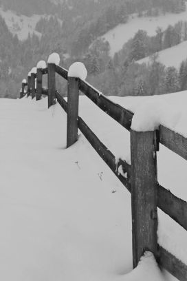 Snow-topped fence