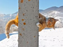 ginger cat, snow games, winter sport, cat photo, Carpathian mountains, Magura Transylvania, comic cats