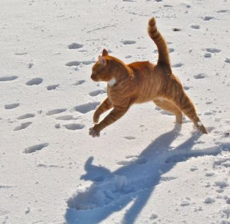 George doing dancercise, electrified by the winter sun