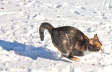 Hobbes in a hurry