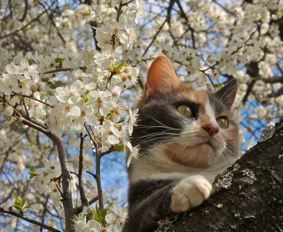 Spring blossom mountain cat