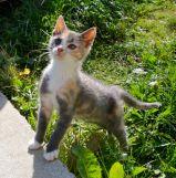 Fearless kitten Hobbs, reporting for fun