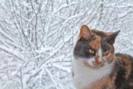 Hobbs inside, snow outside.