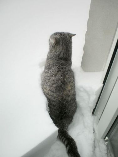 Mouse was not pleased with snow. She has to go out to pee, and she is outside - by a centimetre