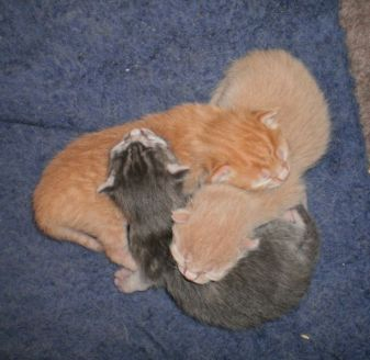 Recyclable kittens, two days old