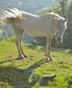 Fana Horse is wondering what to make of this small bold kitten
