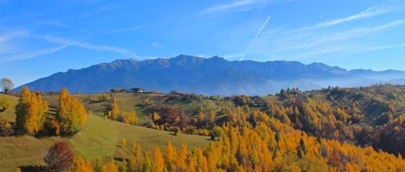 Autumn foliage, Bucegi Mountains, Magura Transylvania, Romania