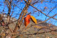 Autumn colour, Magura, Transylvania