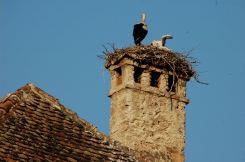 Zarnesti storks