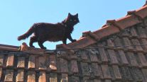 Cat on a hot tile roof, Zarnesti