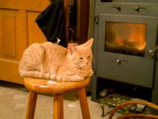First fire of the autumn, first fire for the kittens