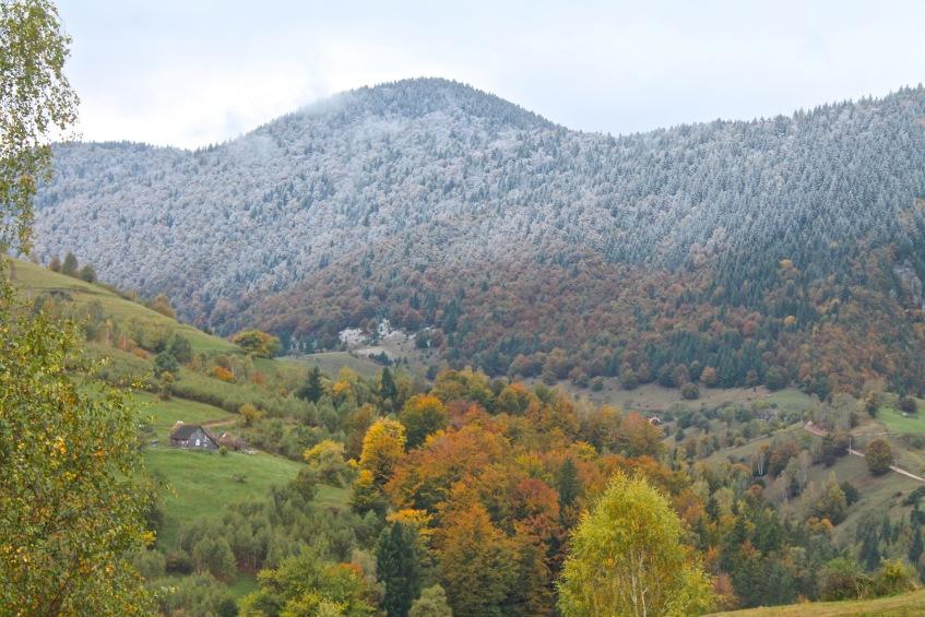 Magura, autumn colours, first snow, Transylvania