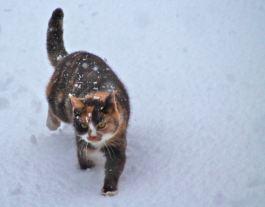 Hobbs unfazed by snow